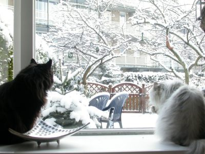 Пластиковые окна зимой
