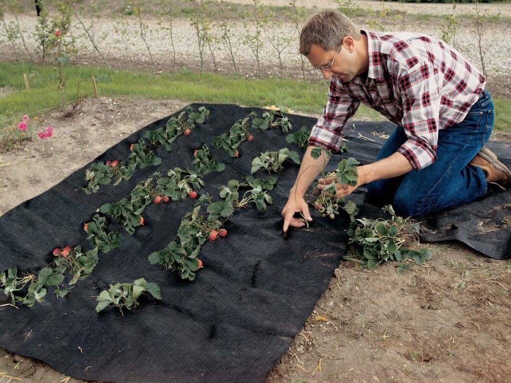 Геотекстиль как защита от сорняков