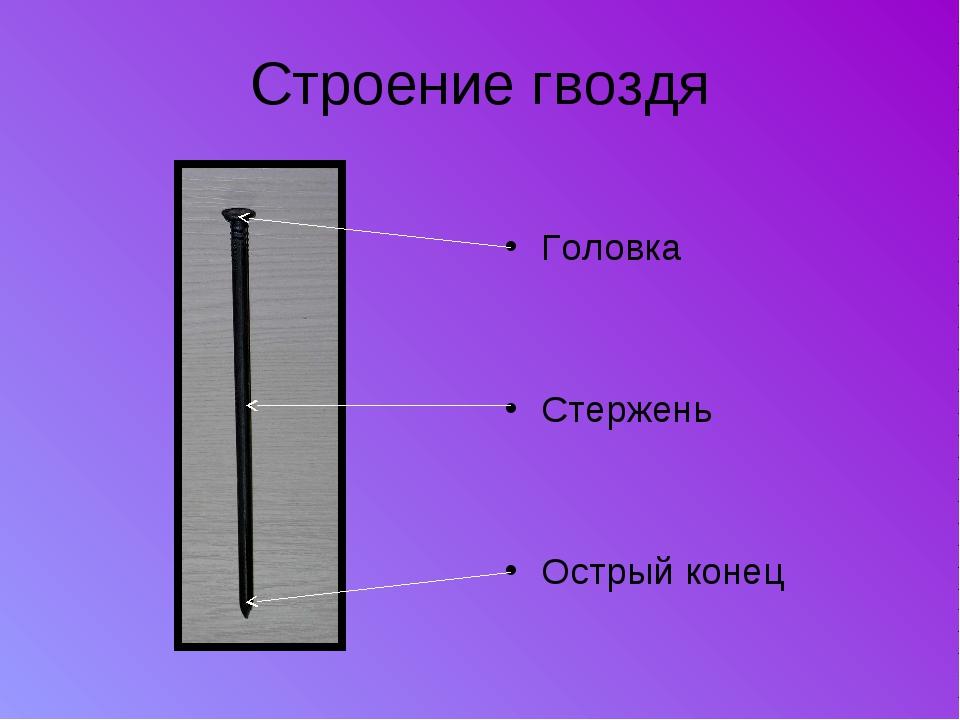 Строение гвоздя