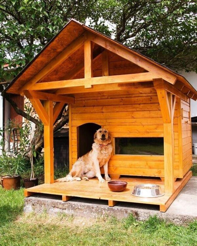 Собака, которая живет во дворе дома