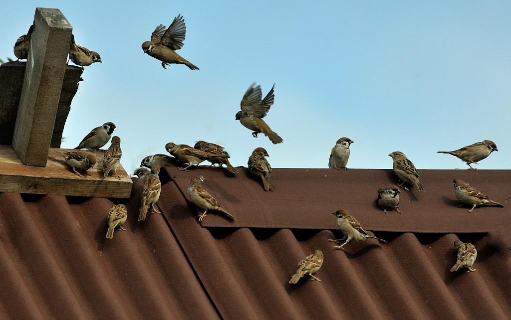 Как отпугнуть птиц?