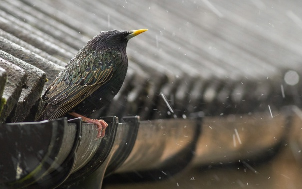 Птица на крыше дома