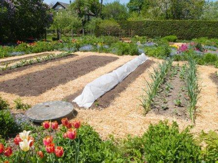 Огород с углубленными грядками