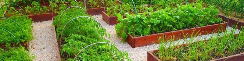 Грядки для огорода, какие грядки лучше